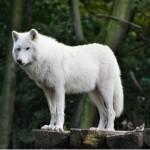 imgsecurity.net/lonewolf
